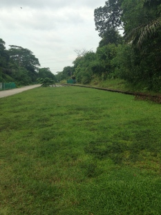 A stretch of the railway near Bukit Timah Station