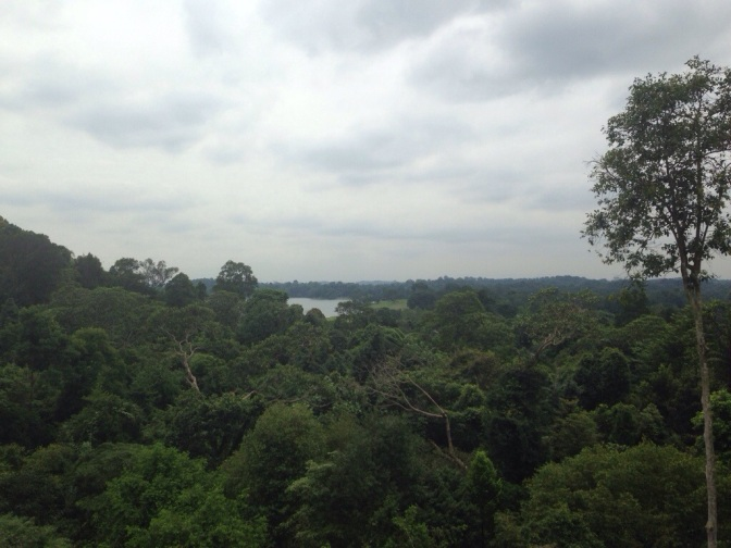 The Lion City Bucket List: The HSBC Treetop Trail